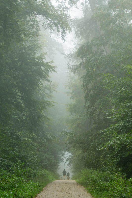 Baltmannsweiler (9)